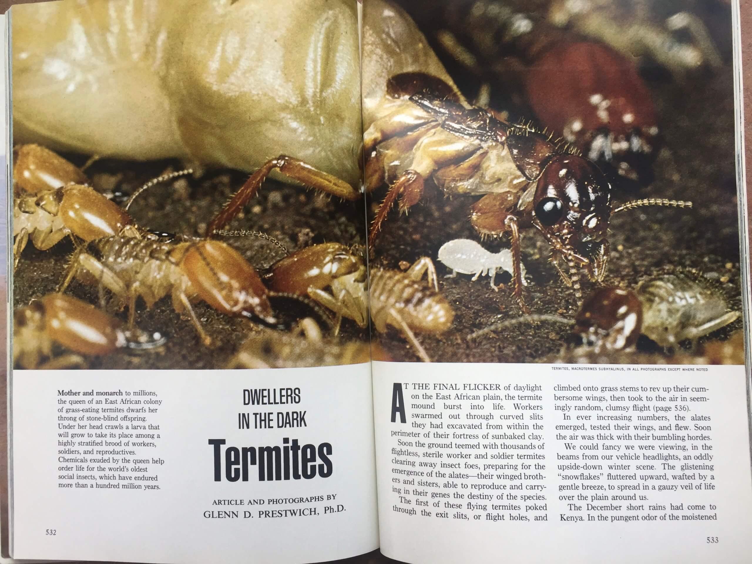 Dwellers in the Dark: Termites
